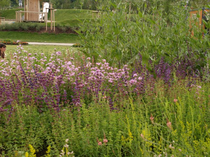 Wildstauden an den warmen trockenen standorten entlang for Gartengestaltung 1220